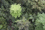 A Birds-Eye-View of Different Shades of Green from Trees Making Up the Forest