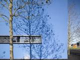 Shadow of Slim Trees on Blue Wall