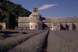 Abbaye Notre-Dame De Senanque  Gordes - Provence  France