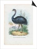Emu  1863-79