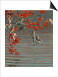 Autumn Harvest - Cedar Waxwing