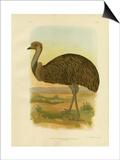 Emu  1891