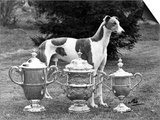 Fall  Crufts  1956  Greyh'D