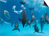 Bottlenose Dolphins Dancing and Blowing Air Underwater