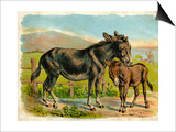 Donkey and Foal by a Fence