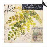 Maidenhair FernSketchbook