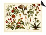 Tropical Botany Chart II