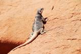 Reptile Lizard in Colorado