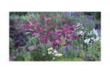 Oakland Spring Garden