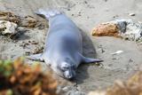 Seal on beach in California