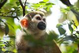 Primate monkey in Florida Zoo