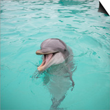 Dolphin Playing