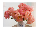 Peonies in Porcelain Vase