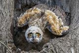 Great Horned Owl nest in Pennsylvania