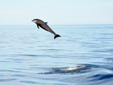 Dolphin jumping in Mexico