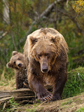 Brown Bear cub with mother in Alaska