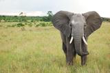 Elephant in Masai Mara Africa