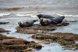 Seals in Scotland