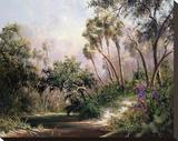 Myakka River Scene