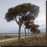 Tuscan Fatorria Strada No 1