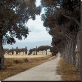 Tuscan Fatorria Strada No 2