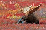 Quebec  Canada - Bull Moose in Flowers