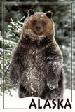 Alaska - Bear Standing in Snow