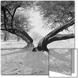 A Snow Scene in Richmond Park  Greater London