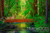 Muir Woods National Monument  California - Bridge