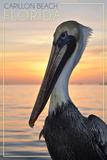 Carillon Beach  Florida - Pelican
