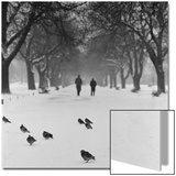 Regent's Park  London Pigeons on a Snowy Path with People Walking Away Through an Avenue of Trees