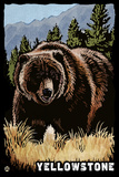Bear Family - Grizzly Bear Scratchboard