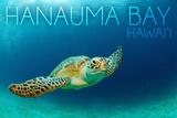 Hanauma Bay  Hawai'i - Sea Turtle