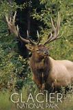 Glacier National Park - Elk Bull
