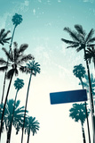 Street Sign and Palms