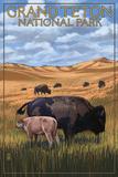 Grand Teton National Park - Buffalo and Calf