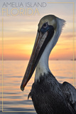 Amelia Island  Florida - Pelican