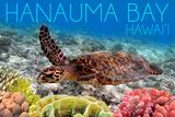 Hanauma Bay  Hawai'i - Sea Turtle and Coral