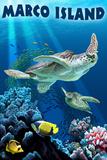 Marco Island - Sea Turtles Swimming