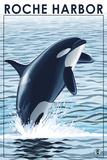 Roche Harbor  WA - Orca Jumping