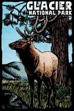 Glacier National Park - Elk - Scratchboard