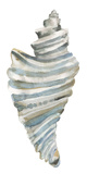 Coastal Seashells - Drill
