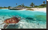 Beach With Green Turtle Mexico