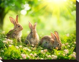 Easter Bunnies in Sunny Meadow