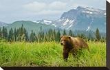 Coastal Brown Bear & Mountains