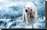 Polar Bear Hunting in a River