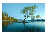 Tree Lake Wanaka New Zealand