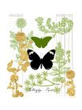 Garden Botanicals & Butterflies
