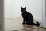 Kitten Black 1