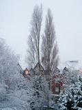 Winter Suburb